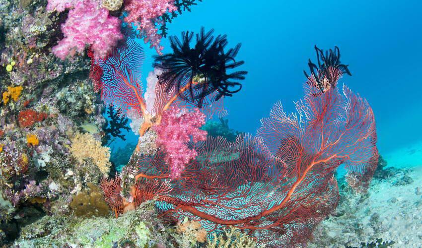 האיים המלדיביים, מקום שאפשר להיות לנצח